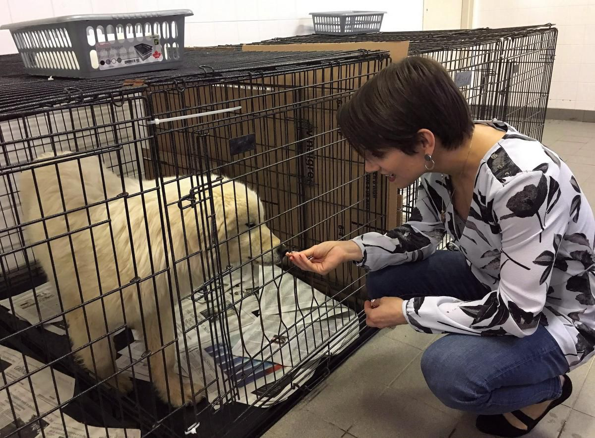 Canadian Olympic gold medalist Meagan Duhamel meets with Saffie, a dog rescued from a meat farm in South Korea, currently being cared for in Montreal