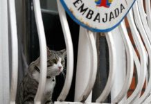 Julian Assange given Cat ultimatum by Ecuador