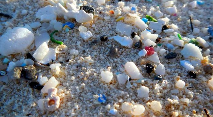 Microplastics have been found in humans for the first time, Researchers Say