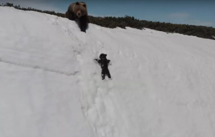 Bear drone video: EPIC struggle to climb a snowy mountain