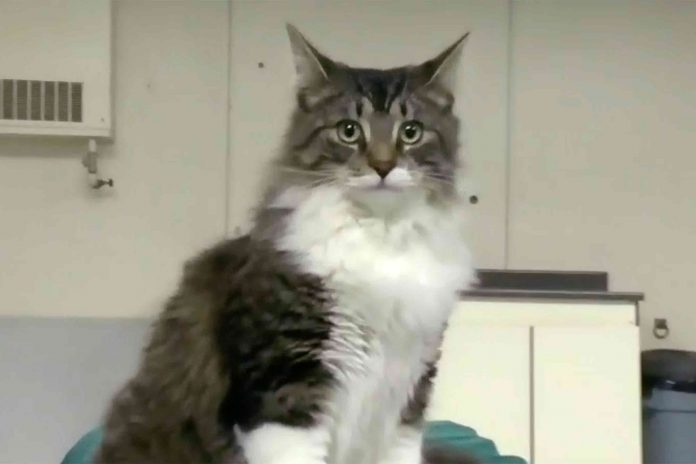 Cat accidentally shipped 700 miles, reunited with family