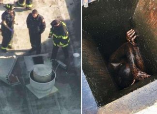 Man Rescued From Grease Vent Of Vacant Bay Area Restaurant, Report