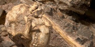 New species Human Ancestor, Identity of Little Foot fossil stirs controversy