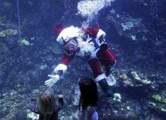 Scuba-diving Santa takes time to feed San Francisco fish (Picture)