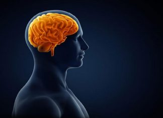Brain works backwards to retrieve memories (Study)