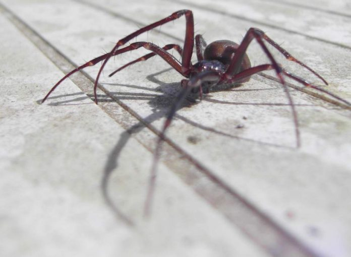 Police respond to spider death threats, Report