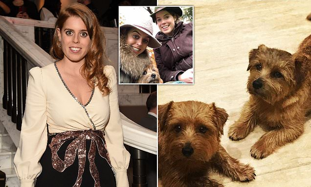 Princess Beatrice dog poisoned during his walk