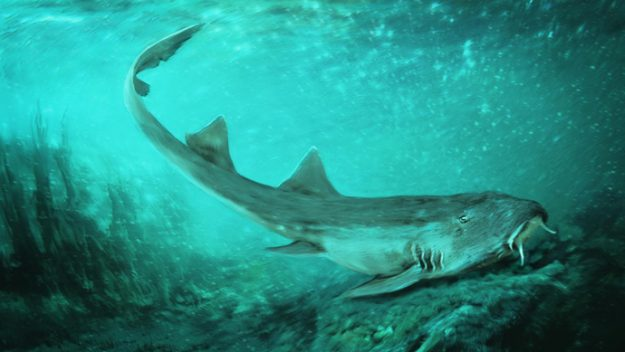 Shark Species With 'Spaceship-Shaped' Teeth Discovered, Report