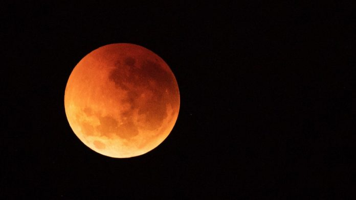 wolf blood moon january 2019 florida - photo #38