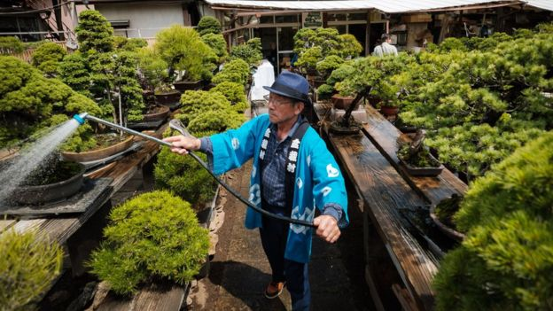 Bonsai theft: Japan couple robbed of 400-year-old tree, Report