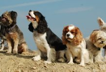 French ban dog barking, owners facing fines