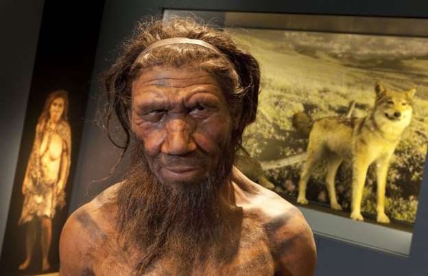 Neanderthal 'hunched back' is a MYTH as spine (Study)