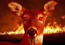 'Zombie deer disease' has impacted wildlife in 24 states, Report