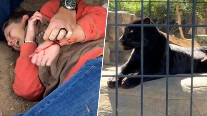 Arizona zoo Jaguar attack woman who crossed over barrier