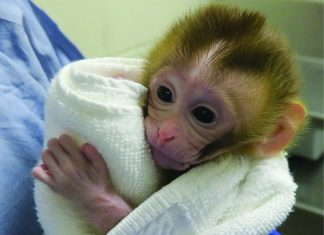 Monkey Born From a Piece of Frozen Tissue