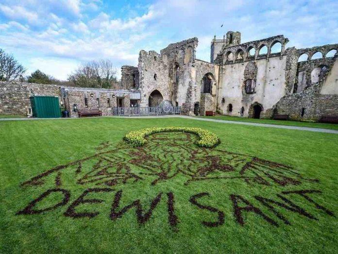 Welsh artist creates giant portrait of Saint David using daffodils (Photo)