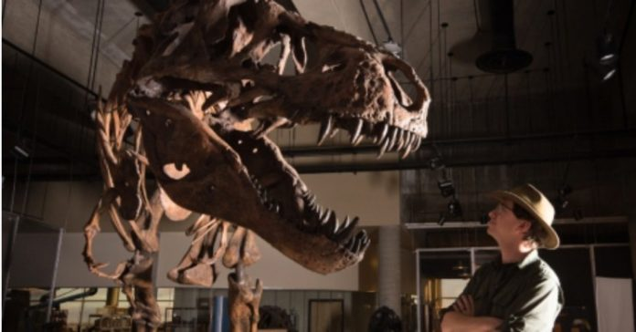 World's Biggest T-Rex Discovered in Canada, Report