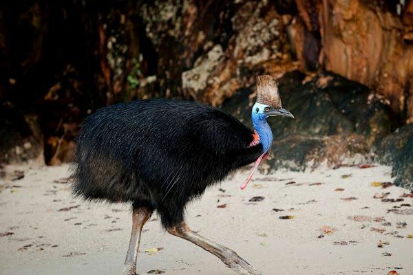 A cassowary, a rare emu-like bird, attacks kills fallen owner in Florida