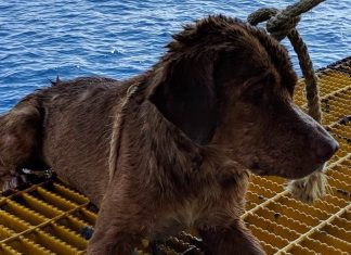 Dog is rescued after it's found swimming 135 MILES out at sea (Watch)