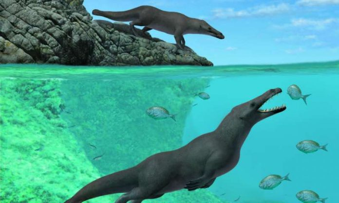 Four-legged whale discovered in Peru (study)
