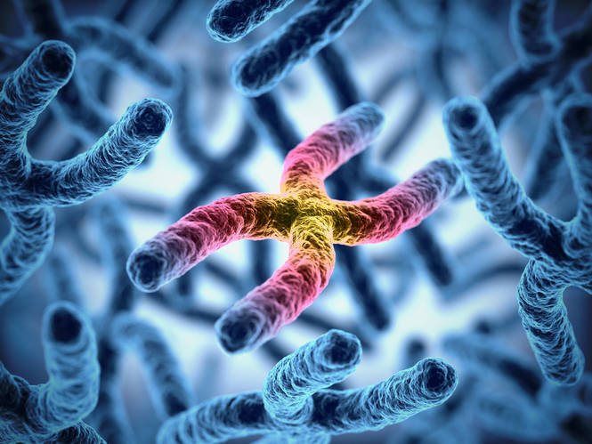 Gene therapy in HIV cure research