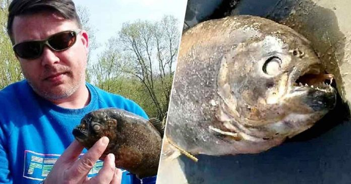 Piranhas discovered in Yorkshire lake after ducks go missing, Report