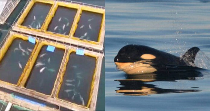 Russia 'whale jail' holding 100 mammals captive in tiny enclosures