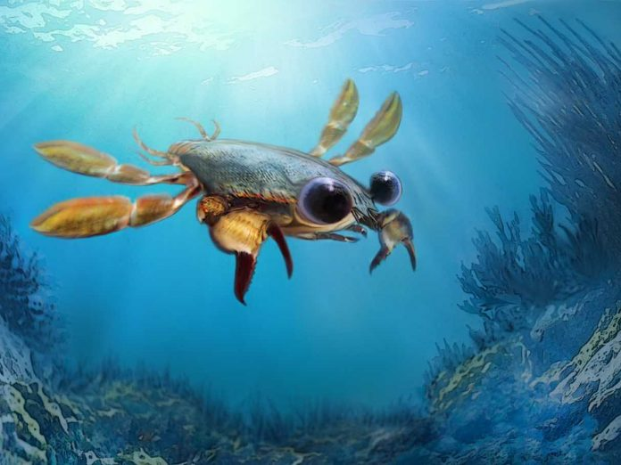 Strangest crab forces scientists to reconsider evolution of modern species