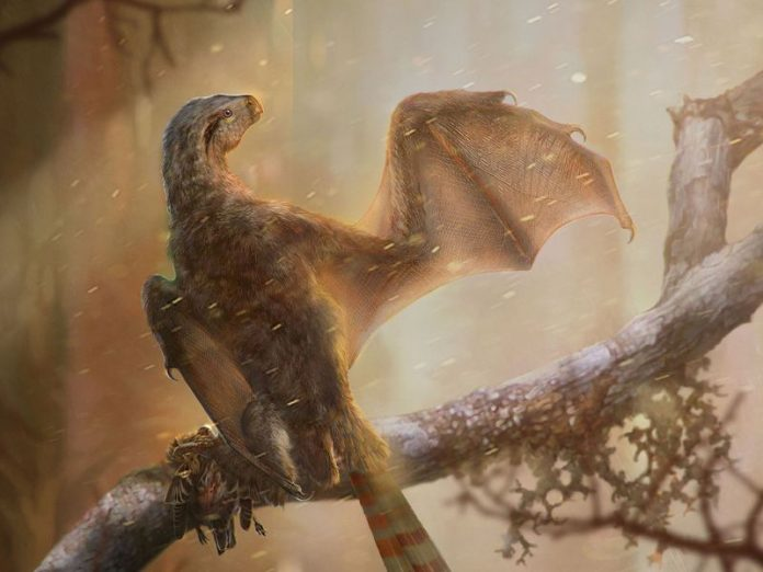 Bat-winged dinosaur found; failed experiment in flight