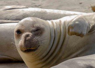 Australia: A Big-Ass Seal Helped Thwart An Alleged Drug Gang