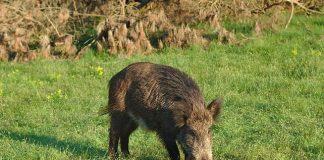 Italian man shoots father dead after mistaking him for boar