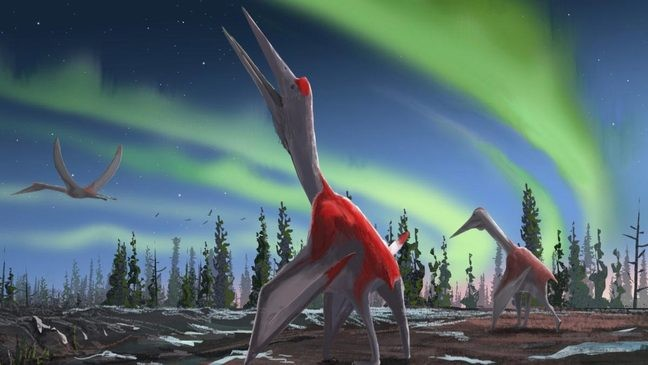 Researchers identify the largest flying animal in history