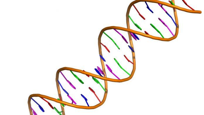 A New Gene