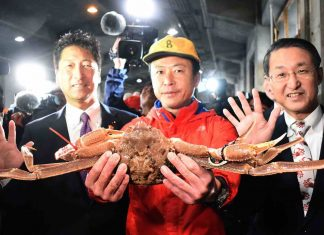 Japan: Crab sells for record $46G at auction (Photo)