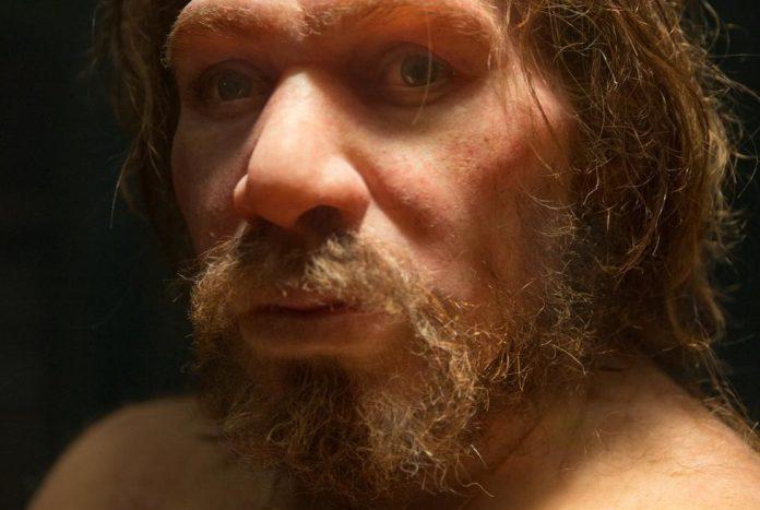 Neanderthal Extinction Down to Inbreeding, Says New Study
