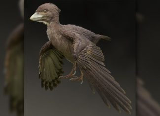 Primitive Fossil Bird Found in Japan, says new research