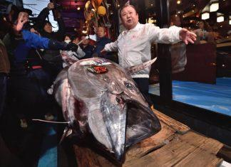 Bluefin tuna sells for $1.8 million in Tokyo, Report