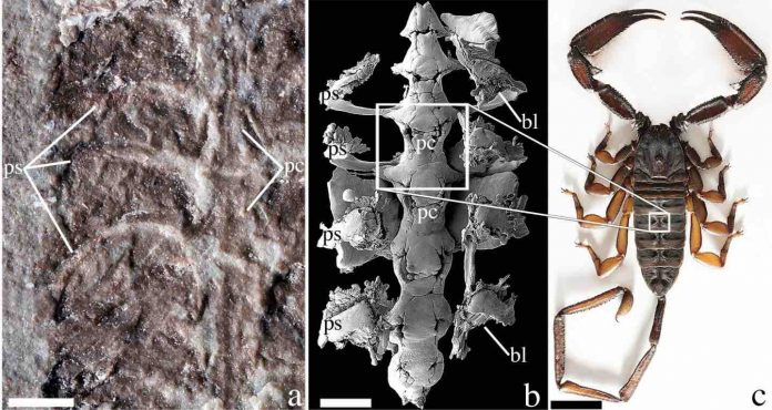 Researchers discover oldest scorpion fossil dating back 437 million years