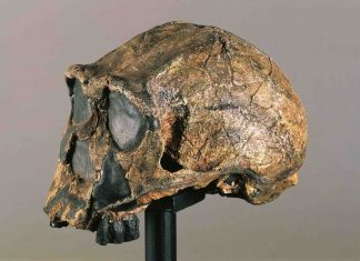 Ghost DNA Hints at Africa's Missing Ancient Humans (Study)