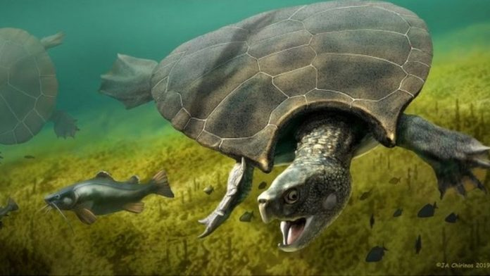 Turtle fossils found in South America (Study)