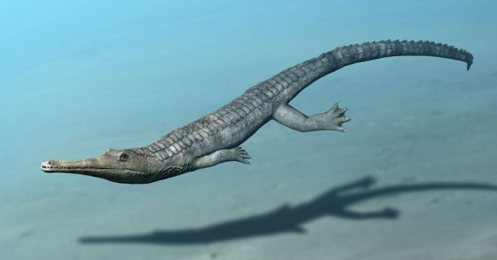 Ancient land-based crocodiles mimicked whales and dolphins