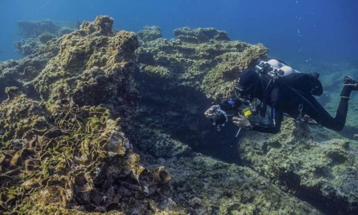 Coral-Covered Shipwreck Discovered off Mexico