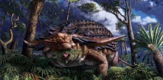 Armoured dinosaur's last meal preserved in stunning detail, Says New Study