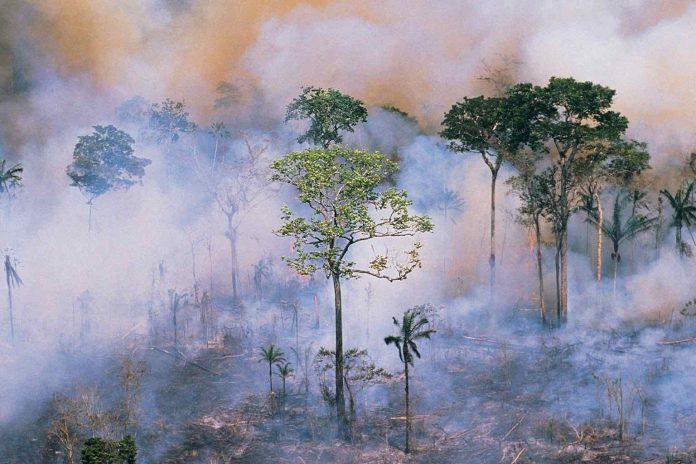 NASA warns conditions are ripe for a severe Amazon fire (Study)