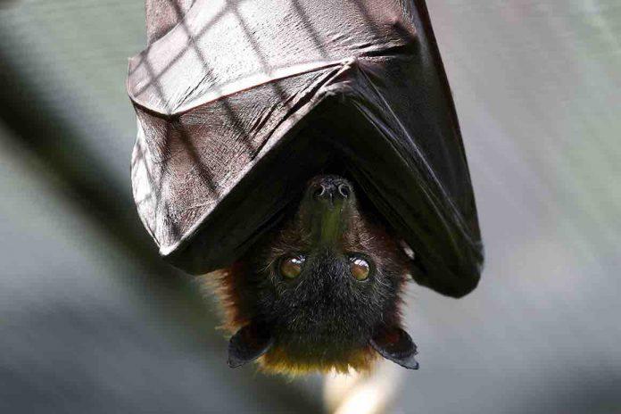 Jo Jorgensen: Presidential nominee, bitten by possible rabid bat