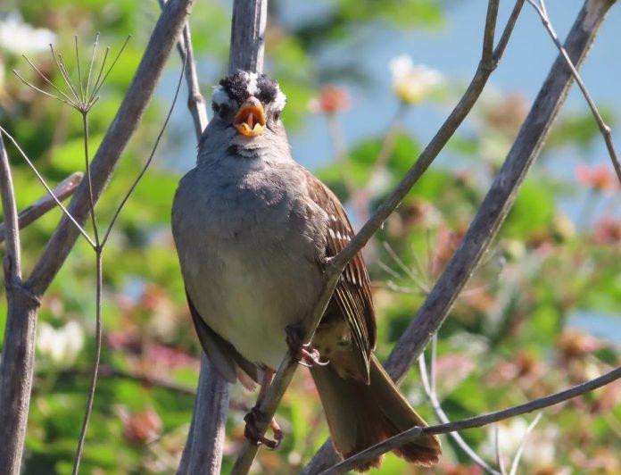 Coronavirus: Bird songs got sexier during the COVID-19 shutdown