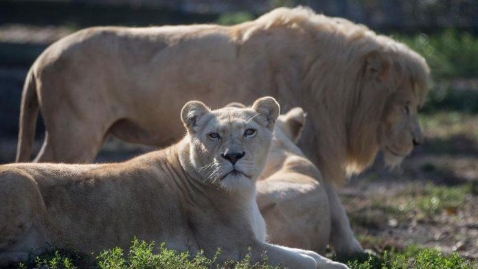 Global wildlife populations: 70 percent decline