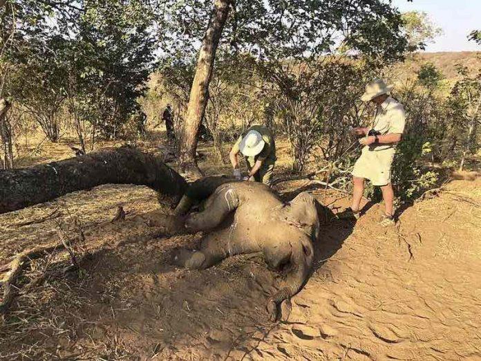 Zimbabwe investigating deaths of 22 elephants, Report
