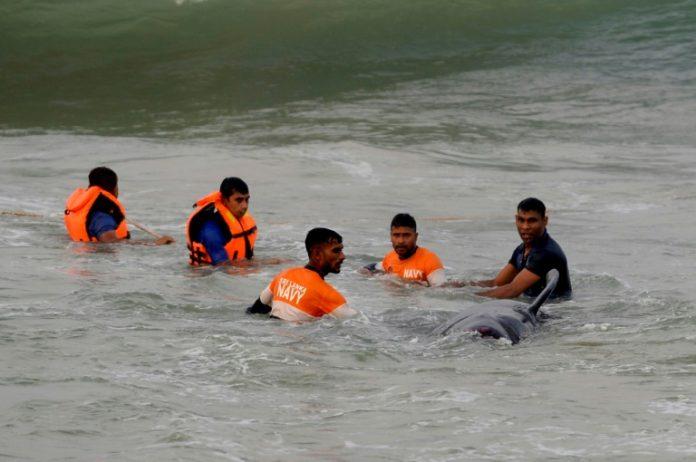 Over 100 stranded whales rescued in Sri Lanka, Photo