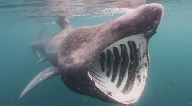 New Zealand: Woman dies in rare suspected shark attack, Report